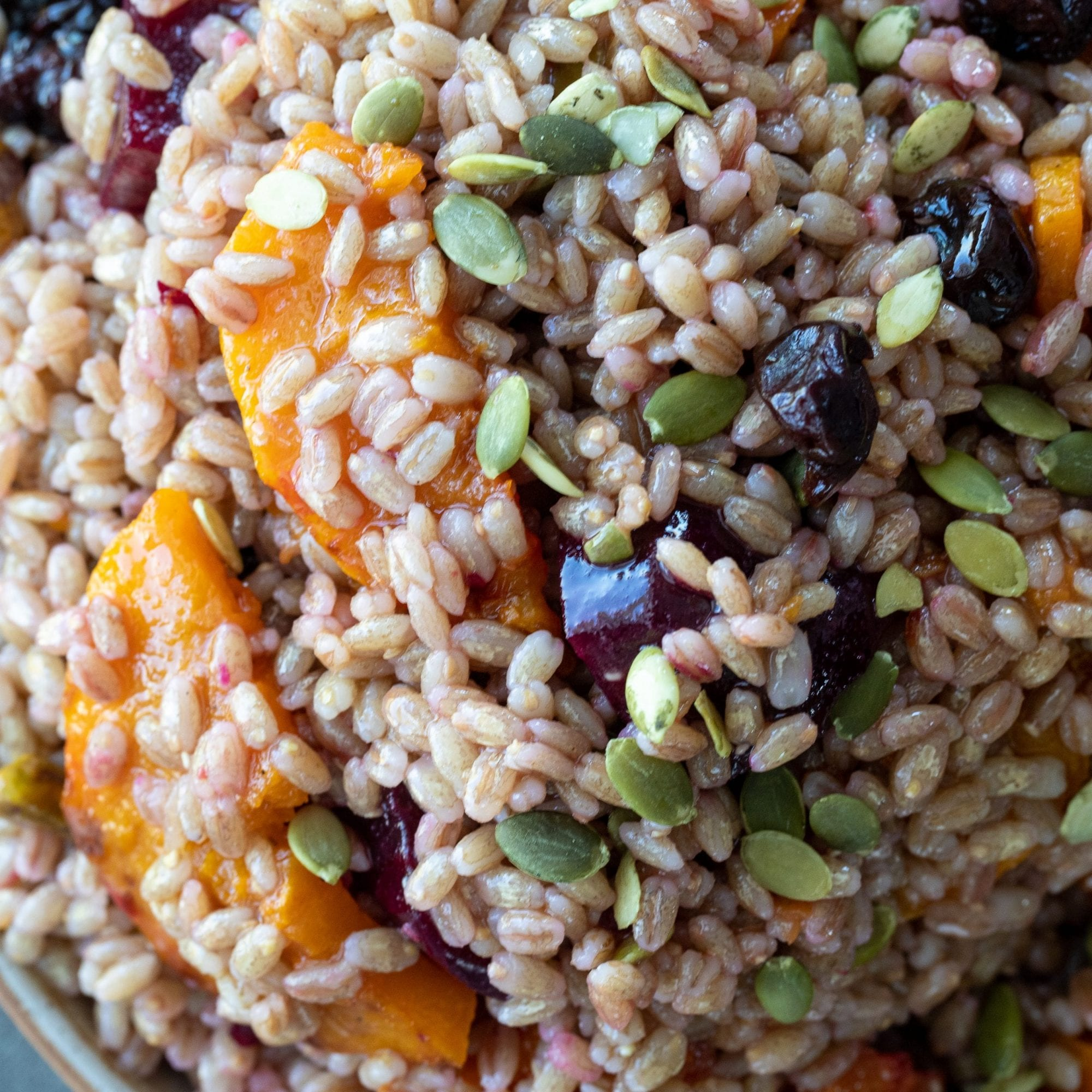 Sprouted Barley Butternut and Beet Salad